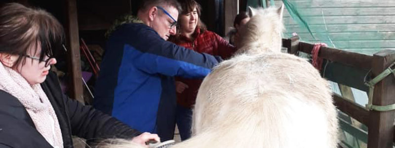 Three adults with learning disabilities performing a meaningful activity, grooming a horse.