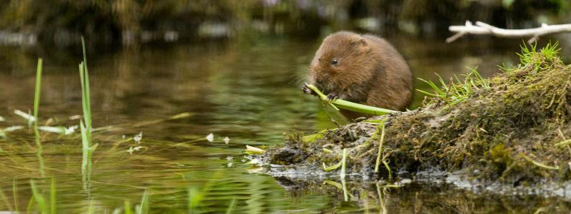 Green Days Work Placements - Somerset Wildlife Trust